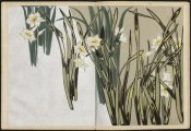 Furutani Kôrin - Shasei sôka môyô (Patterns of Plants and Flowers from Nature), 1907
