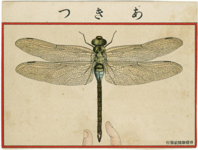 Artist Unknown, Japanese - Dragon Fly from Ehagaki sekai, 1908